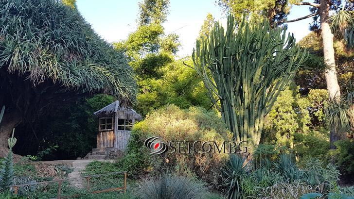 Orto Botanico Palermo 3