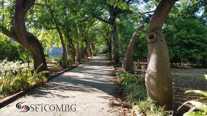 Orto Botanico Palermo 2